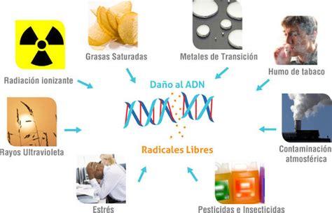 imagenes de radicales libres y antioxidantes radicales libres y antioxidantes mitocondriales retrasa