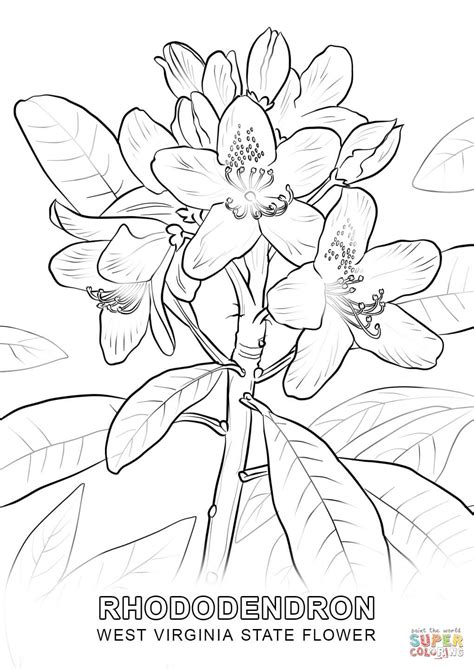 wisconsin flower coloring page coloring page template category page 1 izzness com