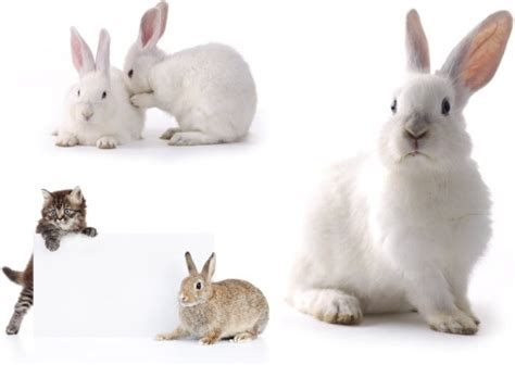 small images small rabbit hd picture free stock photos in image format jpg size 4680x3141 format