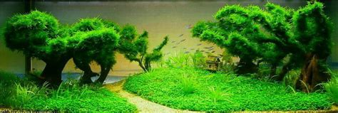 aquascape nz these custom aquariums with underwater trees will blow