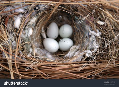 related keywords suggestions for house sparrow eggs