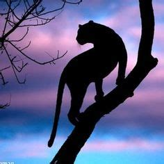 1000+ images about now on pinterest | leopards, trees and