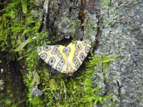 imagenes de barbies extrañas juegos de mariposas gelarti mundo de mariposas simple