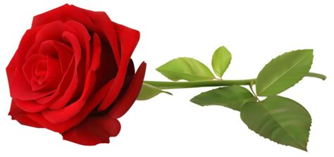transparent clipart image love red rose png clip art