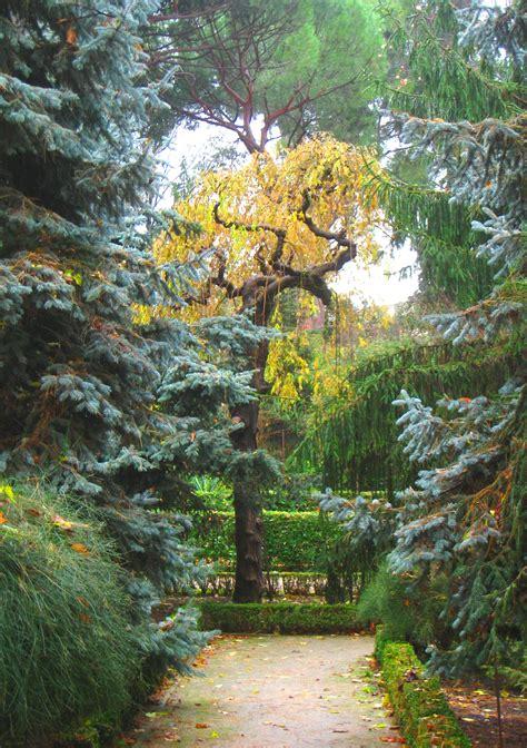 Real Jard 237 N Bot 225 Nico De Madrid Royal Botanical Gardens Madrid