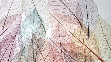 pattern leaf veins leaf vein framework structure patterns stock video 196275