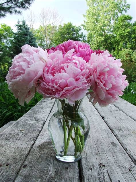 peonies in vase how to make blush mollie