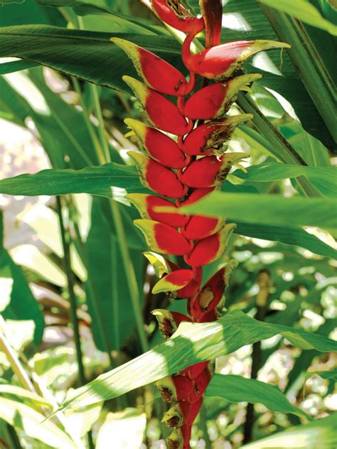 tropical plants pictures tropical plants at the hawaii tropical botanical garden hgtv
