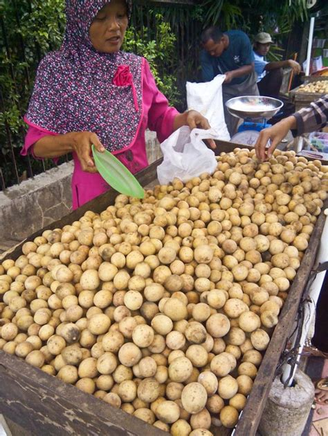 Penjual Bibit Duku Palembang manisnya buah duku dari purbalingga oleh hendra wardhana