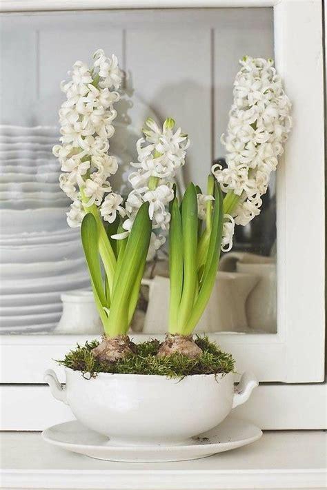i bulbi piante invernali da fiore la figurina
