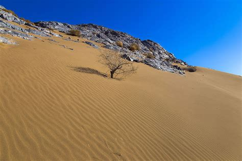 Or Wiki Polond Desert