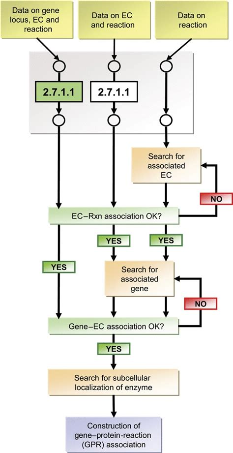 relationship flowchart construction of a gene protein reaction gpr relationship