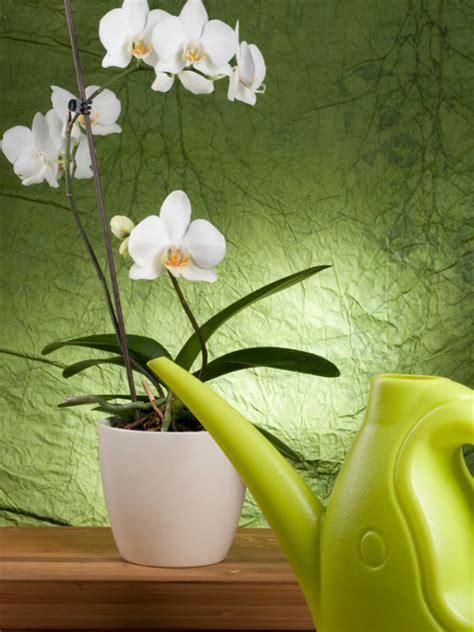 Wie Pflegt Orchideen Richtig 4793 by Orchideen Richtig Gie 223 En