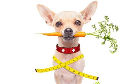 healthy dogs the importance of organic and healthy treats animal connection