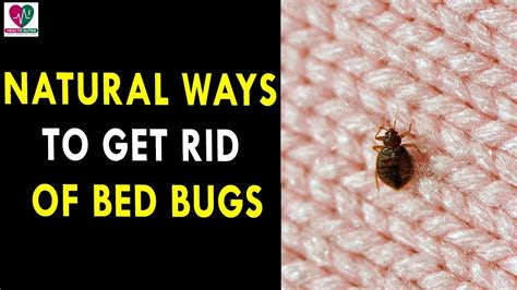the best way to get rid of bed bugs best way to kill bed bugs the best bed bug plan home pest