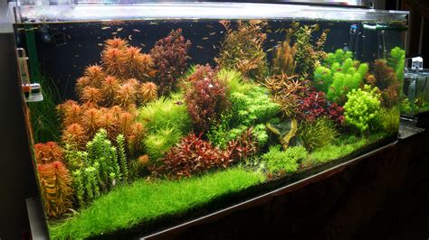 gallon freshwater planted dutch tank rainforest concepts