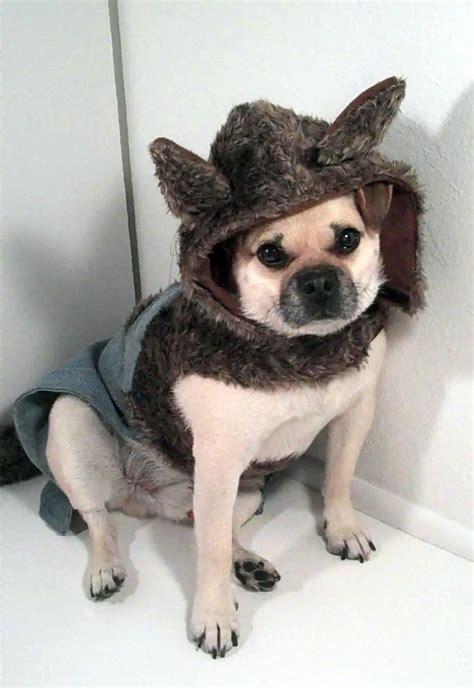 wolf pug pug