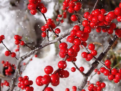 imagenes bonitas invierno las 10 mejores y m 225 s bonitas plantas de invierno paisaje