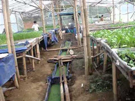 Pupuk Pengganti Ab Mix hidroponik rakit apung nh farm by helsya fitriansyah