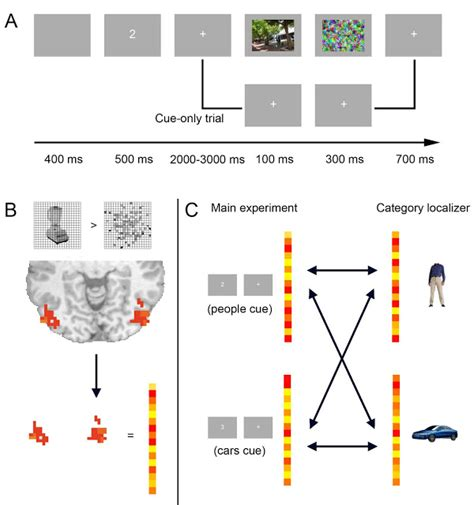 pattern of analysis al fin multi voxel pattern analysis of fmri reveals brain