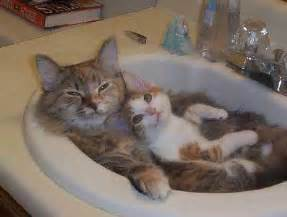 Tiny Bugs In Sink And Bathtub Damn Cute Cats Cute Kittens Photo 9807043