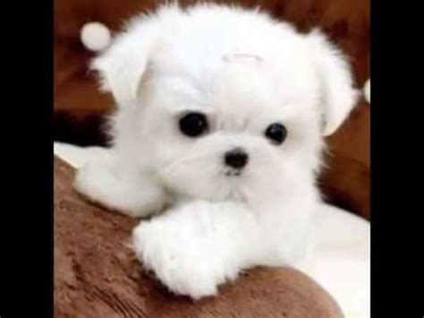 imagenes animales mas tiernos los perritos mas tiernos del mundo youtube