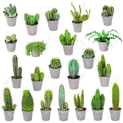 Plante Fleurie D Intérieur Facile D Entretien by Brumisateur Plante D Int 233 Rieur Florideeo