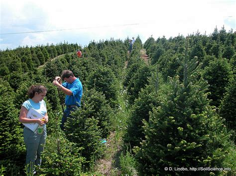 christmas tree production 1 the production of fraser