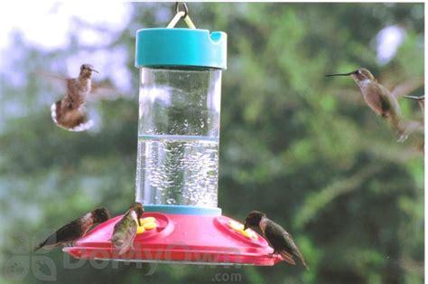 songbird essentials original dr jbs clean hummingbird