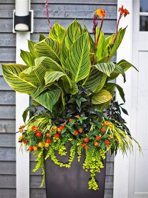 best tropical flowers for your patio gardens outdoor living and planters