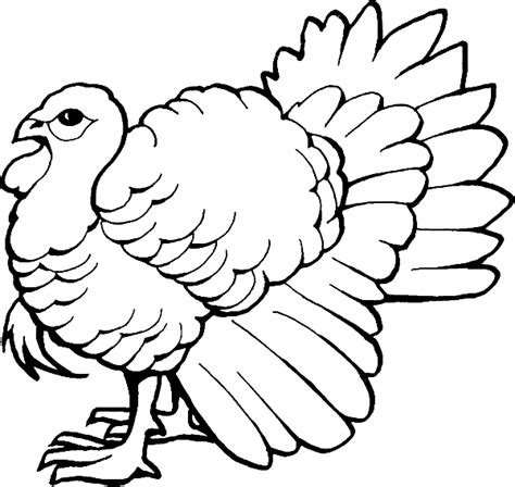 coloring pages of wild turkeys free coloring pages of wild turkey