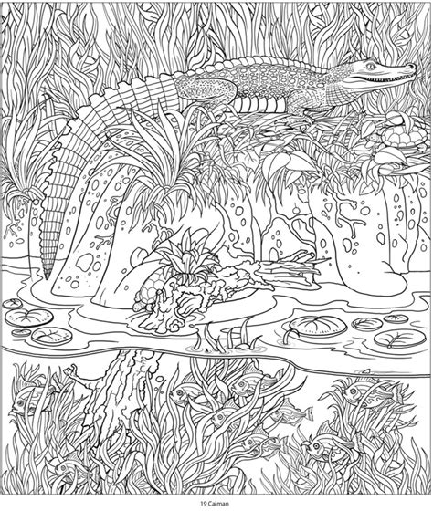 jungle coloring pages for adults welcome to dover publications