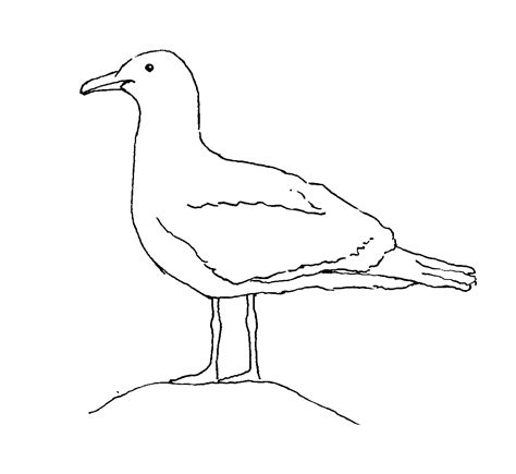 Seagull Coloring Page free seagull pictures coloring pages