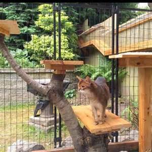 Diy heated igloo for outdoor cats cuckoo4design