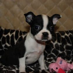 worldwide puppies and kittens worldwide puppies kittens 30 photos 31 reviews pet stores 2560 w hwy
