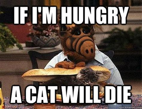 Alf Meme - if i m hungry a cat will die alf cat killer quickmeme