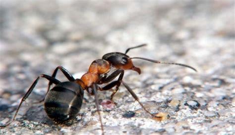 formiche in bagno anche le formiche hanno la propria toilette dailygreen