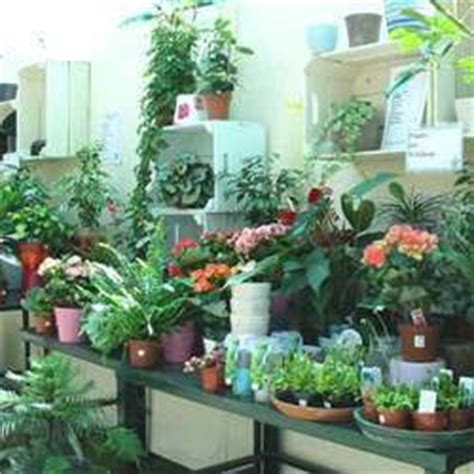 Interior Plants India by Garden Plant In Jaipur Rajasthan Suppliers Dealers