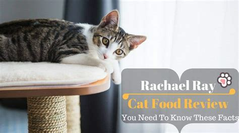 rachael food reviews rachael cat food review you need to these facts tinpaw