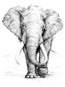 pencil drawings elephants and drawings on pinterest