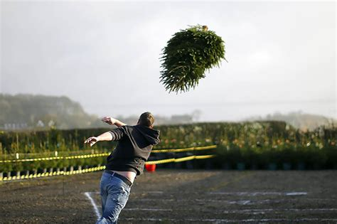 why you should recycle your christmas trees recycling and