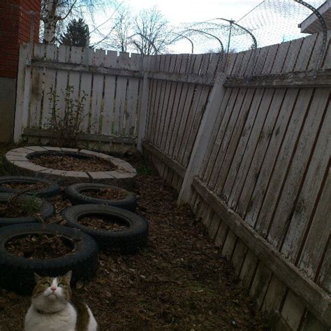 cat in backyard how to keep cats in your yard confluence andrewkurjata ca