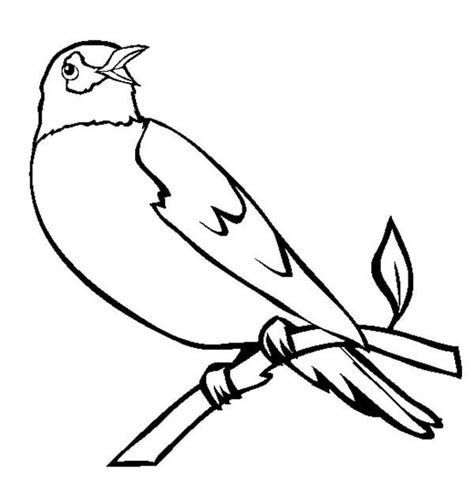 coloring pages of birds singing robin bird singing in the morning coloring page robin