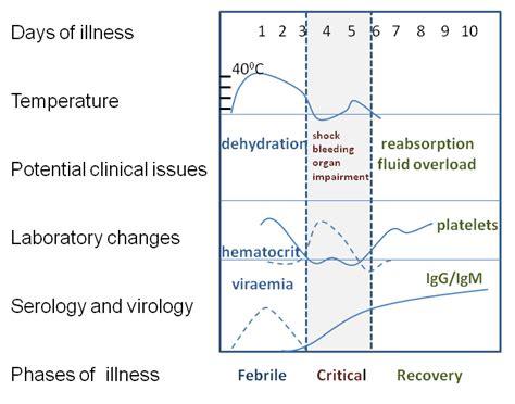 pathophysiology of leptospirosis diagram dengue hemorrhagic fever causes symptoms treatment