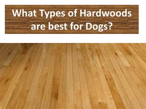 types of hardwood flooring for dogs the flooring