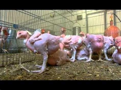 imagenes de animales transgenicos la granja del dr frankenstein 1 parte 2 youtube