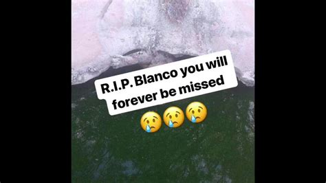 So Cool cj so cool posts pictures of blanco after