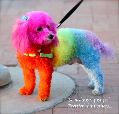 rainbow puppy rainbow images search