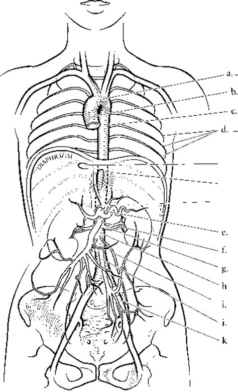 coloring page of arteries human brain with spinal cord free coloring pages