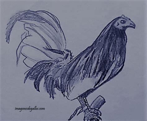 imagenes goticas a lapiz dibujos de gallos de pelea a lapiz imagenes de gallos